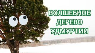 Трехсотлетняя сосна. Удмуртия. Путешествия по России.
