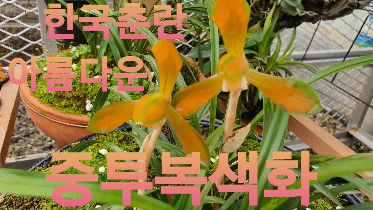 한국춘란 금지구역에서 아름다운 귀한 명품 춘란들 즐감하세요.^^