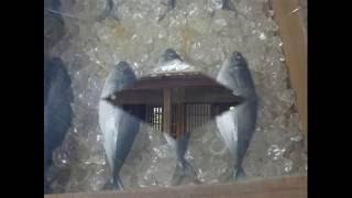 かわいい魚屋さん 加藤省吾作詞・山口保治作曲    Cute Fish Monger