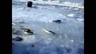видео РД Байкал