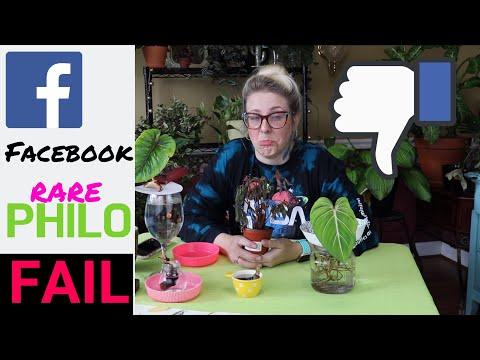FACEBOOK PLANT UNBOXING | FAIL | RARE PHILODENDRON NODE EXPERIMENT PART 1