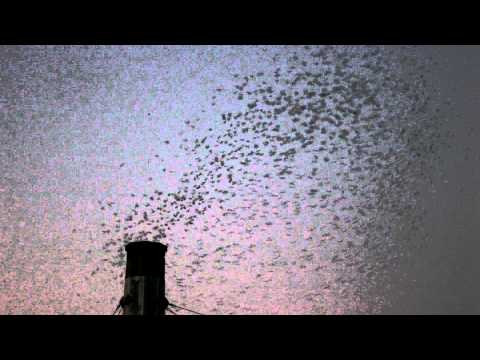The Swifts roost in Portland