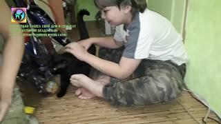 Спасение и усыновление бездомного кота Кристиана Приют Дари добро в Новосибирске shelter for animals