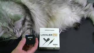 Rode Lavalier Go Audio Test