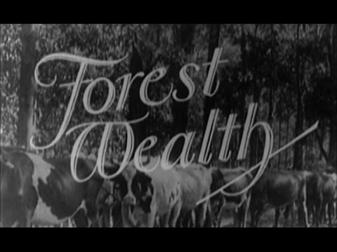 Forest Wealth; Forestry Commission of NSW activities & intentions from 1926