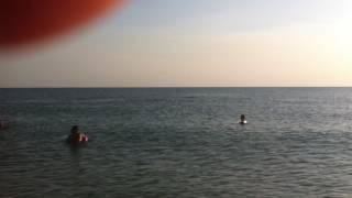 Дельфины. Станица Благовещенская-2016.(Дельфины,на центральном пляже,в станице Благовещенской, регулярно радуют людей своим появлением., 2016-09-23T06:08:50.000Z)