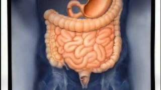 Introduction to Gastroenterology
