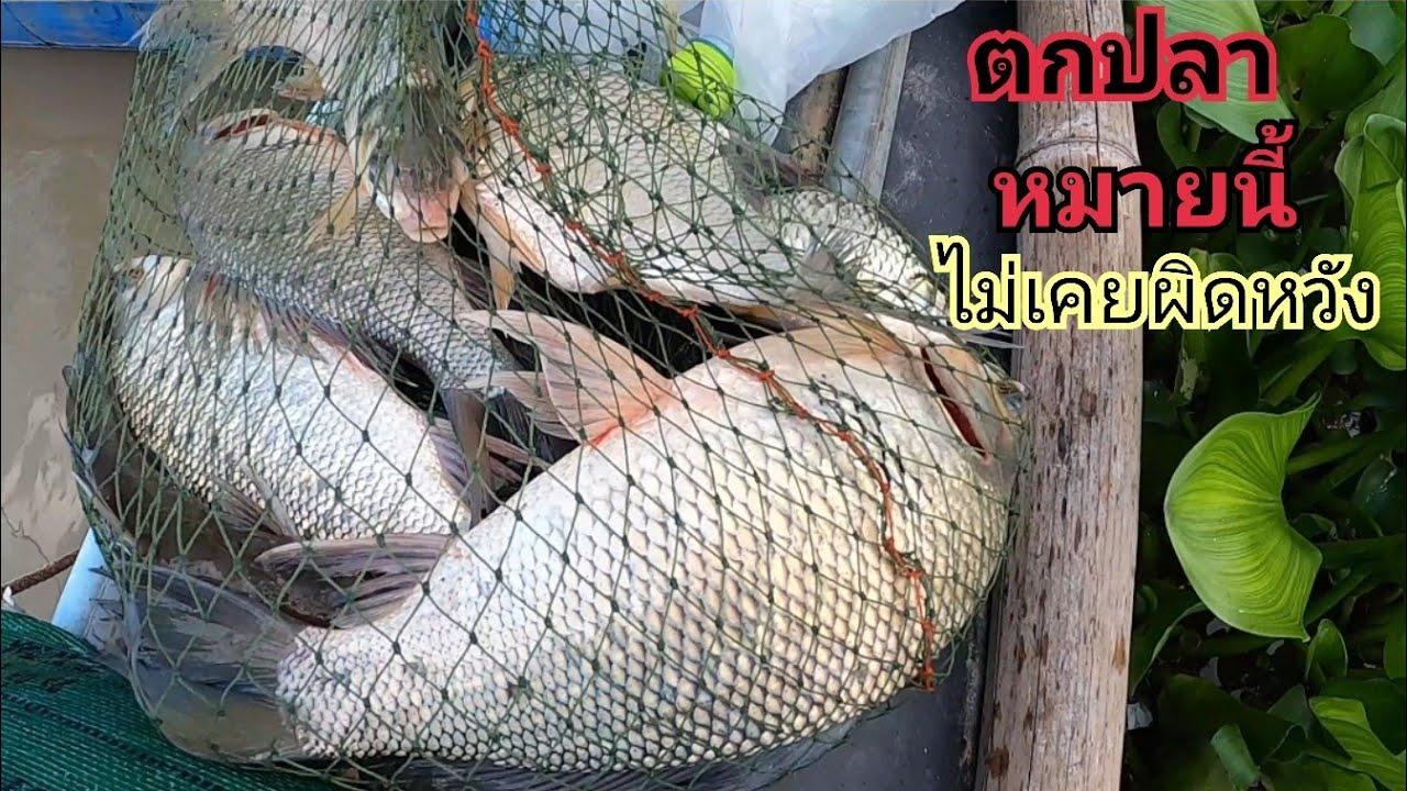 ไม่เคยผิดหวังตกปลาในกระชังล้าง / ต้อม คนทำมาหากิน