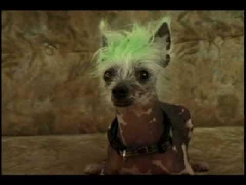 "Rascal ""The World's Ugliest Dog"" in TELE-ZOMBIE"