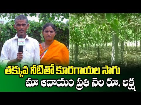 Vegetables Farming Through Pendal System With Less Water || High Yield Crops || SumanTV Rythu