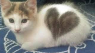 A cute cats 😍😍