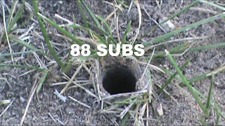 How To Catch A Queen Ant