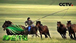 《绿色时空》 20190721 镜头下的草原牧歌| CCTV农业