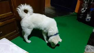 Funny Cute Dogs Playing With Laser Light  - Cute Dogs Vs Laser Light- Epic Dog Fails-Dog Funny Video