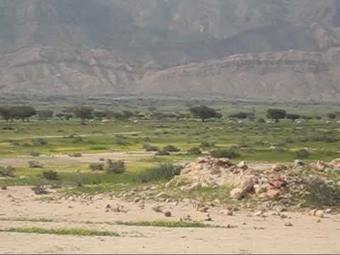 Antelope herd tunisia