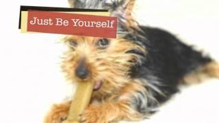 Video Nassau County Dog Boarding 516.564.3319 download MP3, 3GP, MP4, WEBM, AVI, FLV Agustus 2018