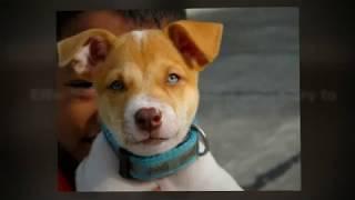 "Bucks Couny Pa ""puppy Training"" - By Bob's Pet Stop"