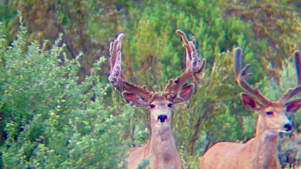 arizona-strip-deer-hunts-beauty-dior-sucking-lips-porn