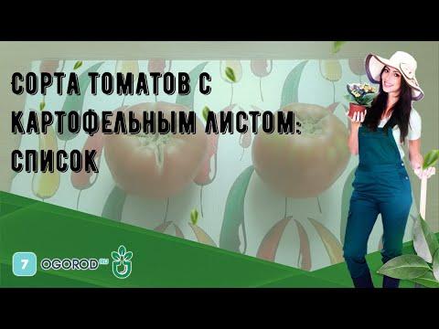 Вопрос: Томат Картофельный малиновый, что за сорт?