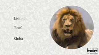 Learn Kannada Visual Dictionary - Animals via Videos by GoLearningBus(3K)