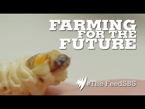 Edible insects: the future of food?
