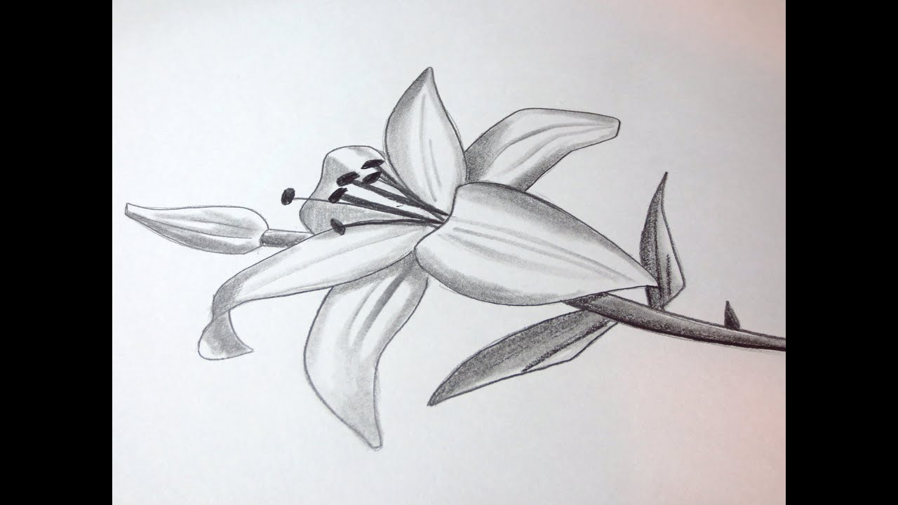 Black Line Flower Drawing : Awesome black and white flower paintings pictures inspiration