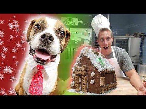 Dog eats ENTIRE gingerbread ho...