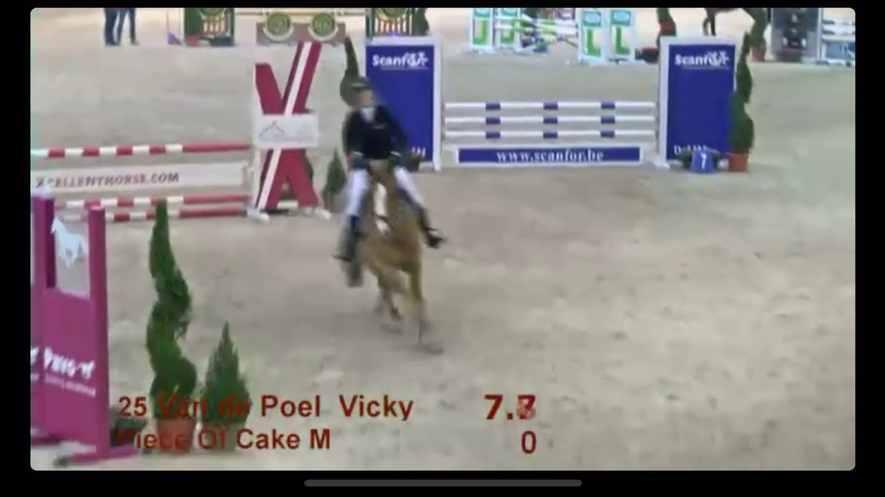 Piece of Cake M - 4yo Stallion Competition Lier