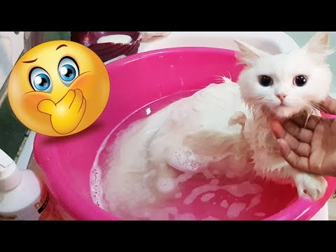 | How to bath your cat