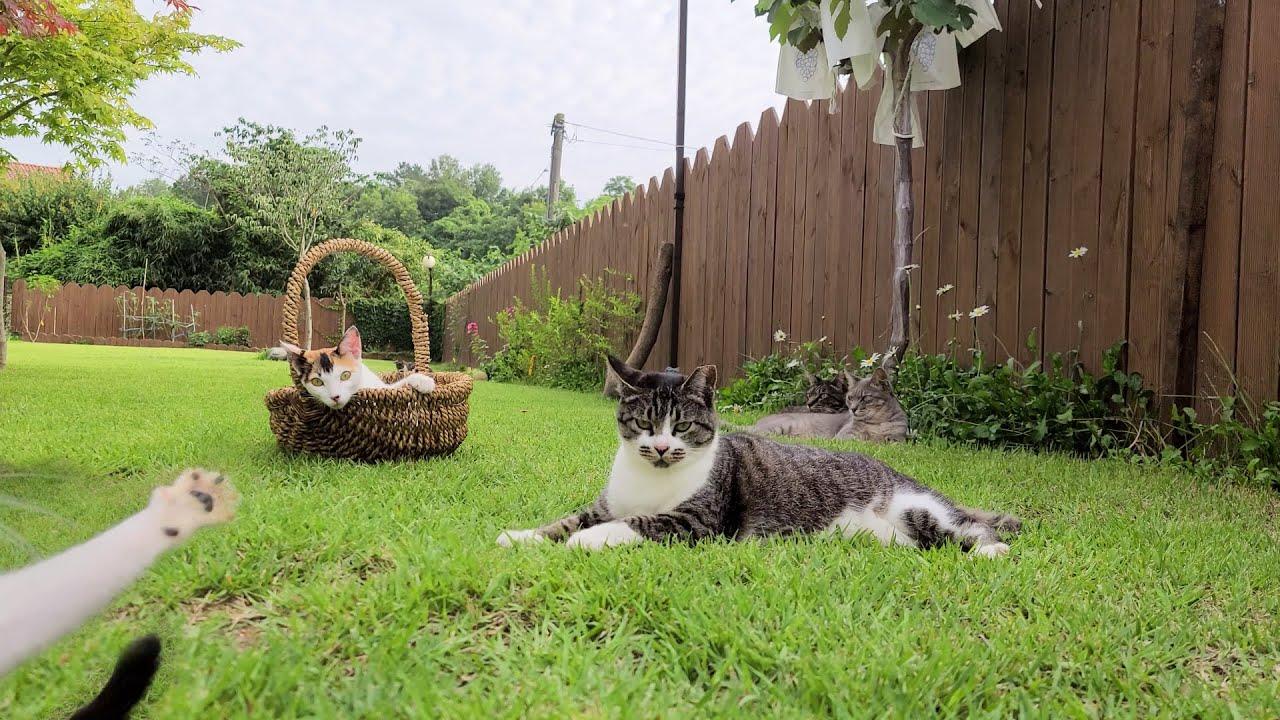 [#116] 마당고양이들의 주말