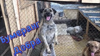 Съездили в приют для животных | Бумеранг Добра