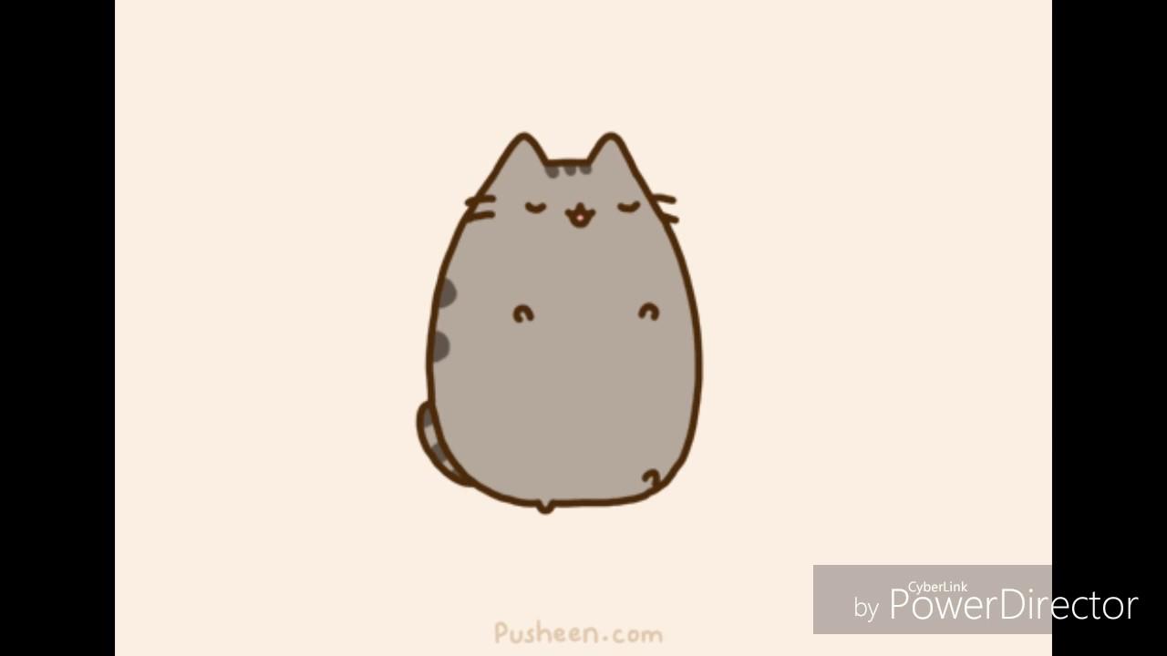 modern siamese kitten