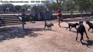 "Yes Can Teach An Old Dog New Tricks - Blue Heeler ""Max"" Off-Leash for Once!"