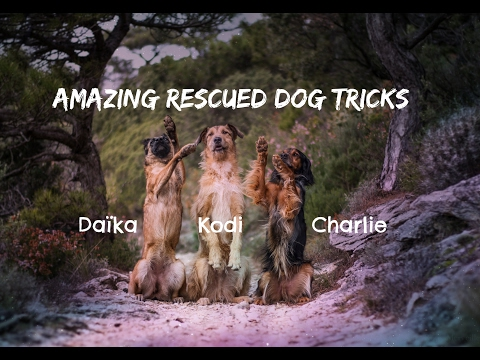 Amazing [Rescued] Dog Tricks