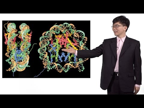 Taekjip Ha (Johns Hopkins / HHMI) 2: Combining FRET And Optical Trap To Study The Nucleosome