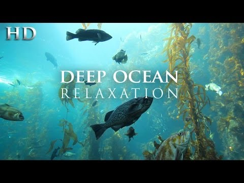 "NEW 1 HR Underwater Video ""Deep Ocean Relaxation"" Nature Video 1080p"