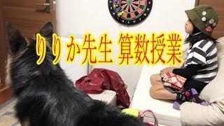 大型犬・#ジャーマンシェパード・マック君 今日も孫娘帰宅時間は#日産セ...