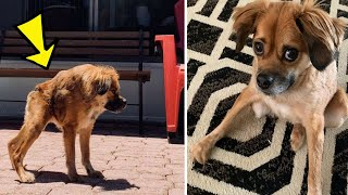 Dog Born With A Super Short Spine Doesn't Realize She's Any Different
