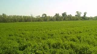 Crosby Mint Farm - The History