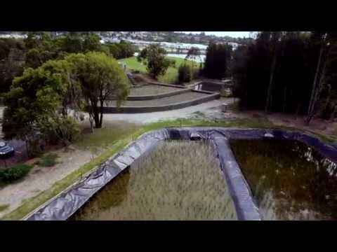 Environmental initiatives at Sydney Olympic Park
