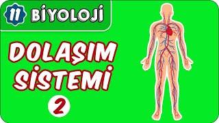 Dolaşım Sistemi-2  11.Sınıf Biyoloji