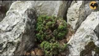 видео Ландшафтный дизайн в альпийском стиле