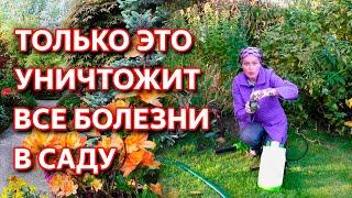 Как обработать сад осенью от болезней и вредителей. Обработка сада осенью. Осенняя обработка сада.