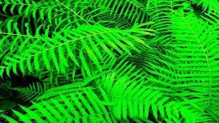 Лечебные Звуки Леса и Весеннее Пение Птиц. Бинауральный Звук 3Д