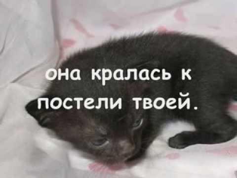 Смерть кошки, приближение смерти кошки, феномен одинокой