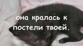 Как умирают кошки ?