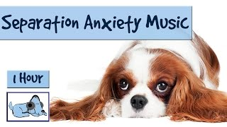 If Your Dog Suffers When You're Away - Try This Music. Separation Anxiety Special.