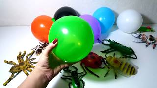 LEARN COLORS with Balloons & Insects - Finger Family Song & Nursery Rhymes