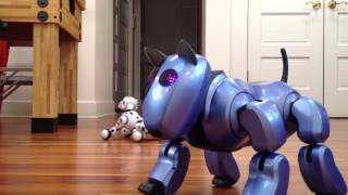 Zoomer And Genibo Sd Robot Dogs