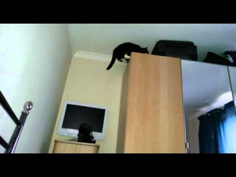 Unexplained orb when cat jumps on wardrobe